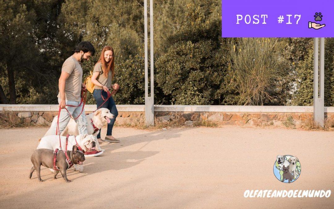 El paseo y tu perro