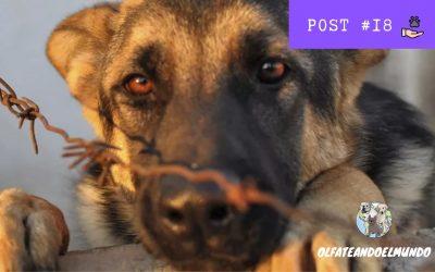 ¿Qué hacer en caso de maltrato animal?